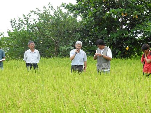 花蓮場安排田間觀摩,左起場長黃鵬、作物輔導課長宣大平、輔導員林泰佑。