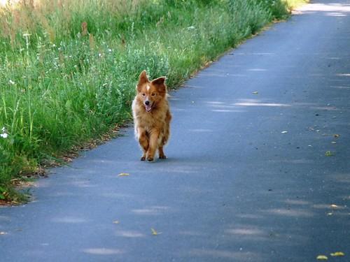 Unser Füchschen/ Our little fox