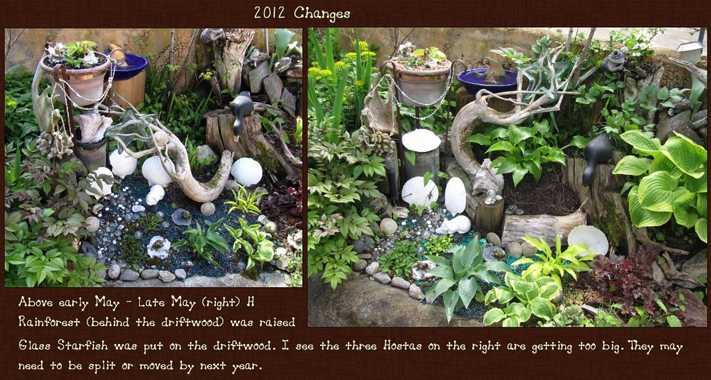 Mini Water Garden  2