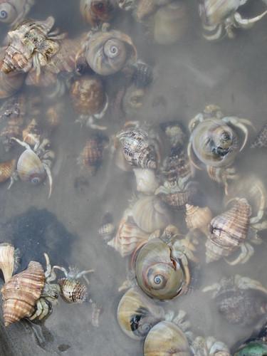 Hermit Crabs.