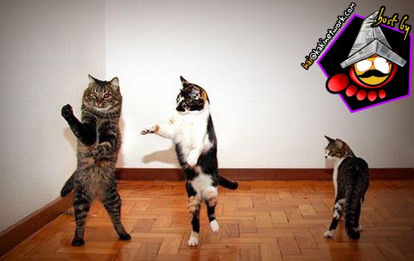 gambar kucing 09