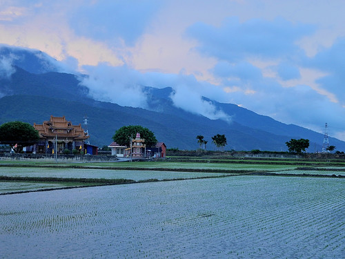 Rice Paddies Outside Chihshang (池上)