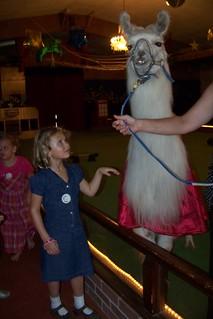 Q6 and llama