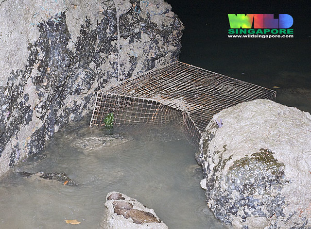 Fish trap on Changi rocky shore