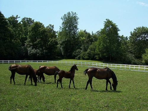 MaresAndFoals
