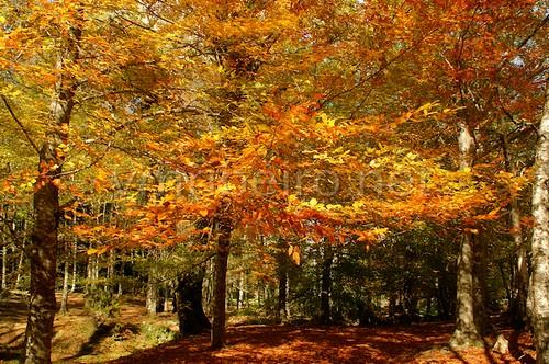 Outono no Gerês by VRfoto
