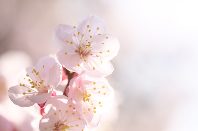 東京路地裏散歩 谷中編 2014年3月23日