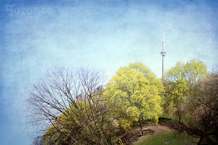 Young Spring on Toronto Planet
