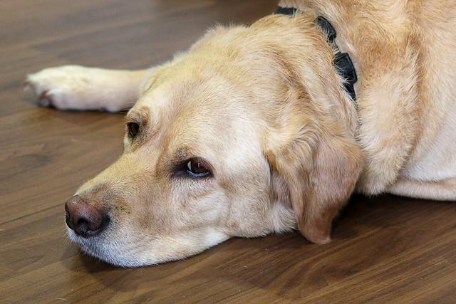 Guide Dog Breeding Centre Leamington Spa Address