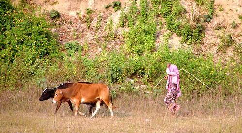 203 Cox Bazar (43)