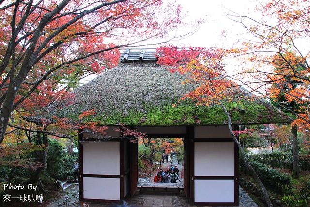 嵐山旅遊景點-常寂光寺13