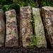 Vertical stones