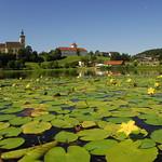 Waldhausen im Sommer