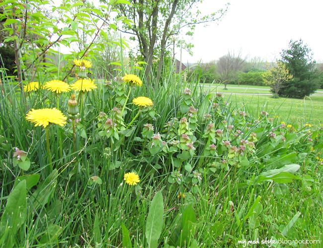 ohio weeds1