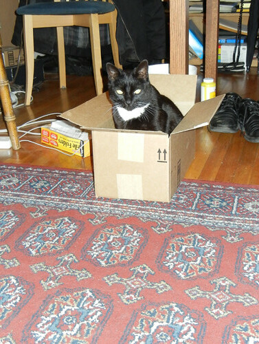 Cat in Box 8660