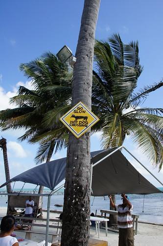 Belize: Go slow - Hot Dog crossing