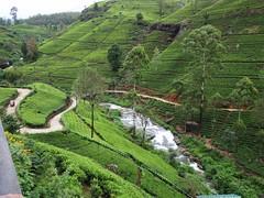 agriculture, rainforest, flower, mountain, bird's-eye view, valley, mountain range, hill station, plateau, terrace, landscape, mountain pass, biome, plantation, mountainous landforms,