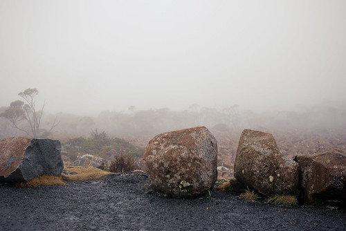 Foggy at the top of Mt Wellington