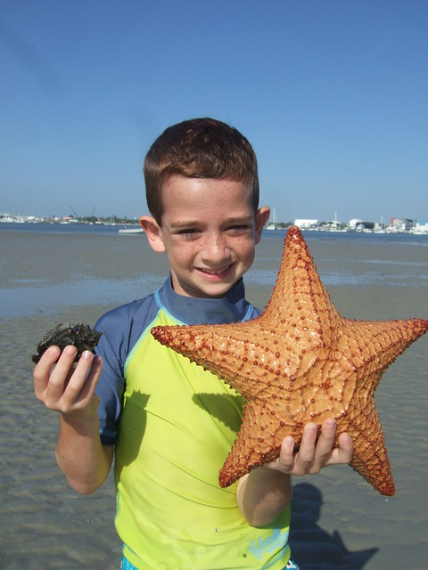 Samuel finds a big cushion starfish.