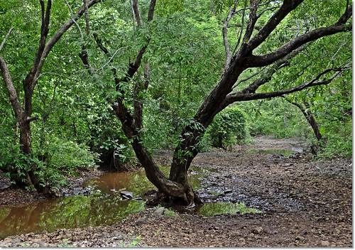 india nature forest july monsoon maharashtra 2012 westernghats mahuli tansa indianature thanedistrict vashind snonymous tansawildlifesanctuary monsoon2012