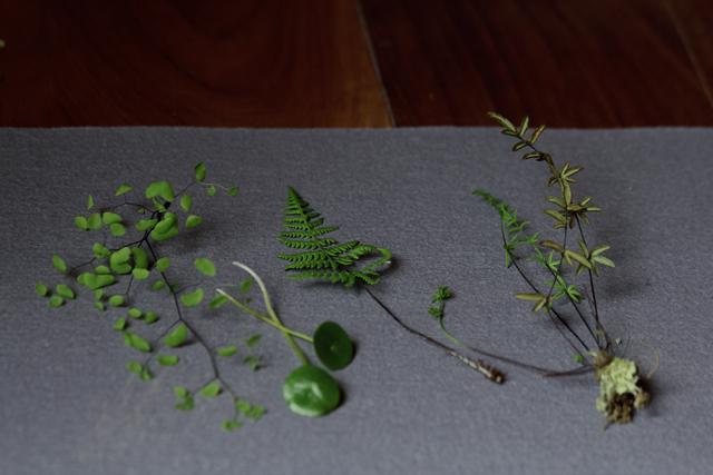Woodland Specimens