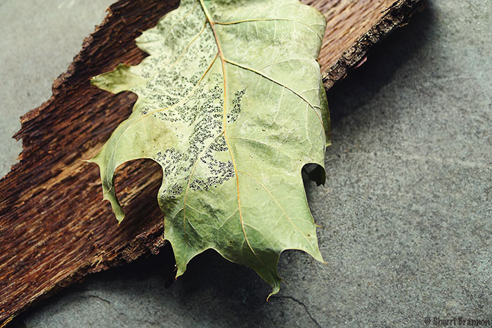 leaf and bark