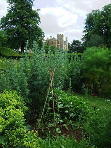 Herbal Healing Garden