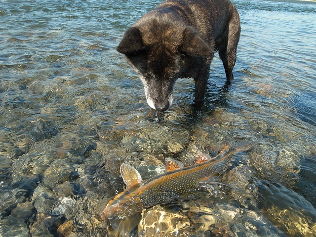 Dog and fish flickr photo sharing for Fish for dogs