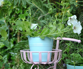 Bicyle planter with Petunia's