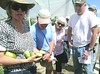 When to harvest green tomatoes