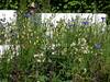 Chelsea 2012 flower border