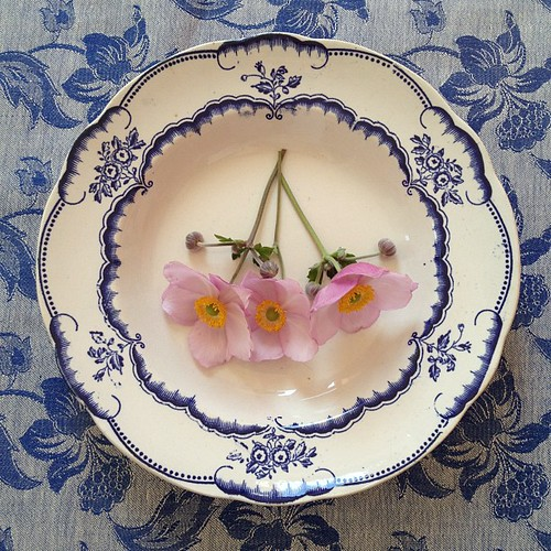 Pink Anemone on Vintage Plate and Fabric. Sweden delights!