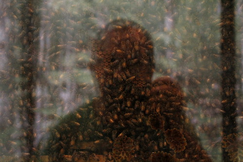 light summer selfportrait canada colour reflection topf25 glass photo flickr novascotia bees halifax honeycomb canondslr beehive museumofnaturalhistory colony 2012 digitalimage hrm august12 contemporarylandscape sociallandscape topf25faves canoneos60d avardwoolaver avardwoolaverphoto startcafe2012