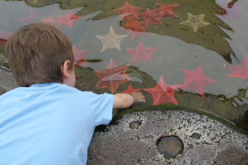 Olsen checks out the sea stars