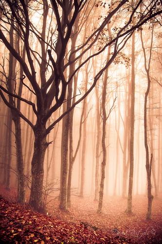 Autumn in Casentino by David Butali