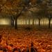 The Grove - Salem Oregon by JEFF McNEILL PHOTOGRAPHY