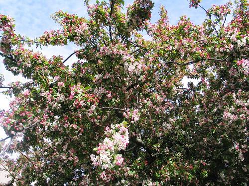 Spring '14