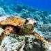 Turtle by Ben Yi