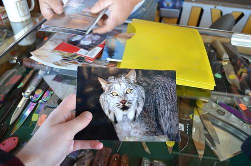 Bobcat's Pet Lynx