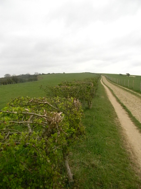 long track with hedge