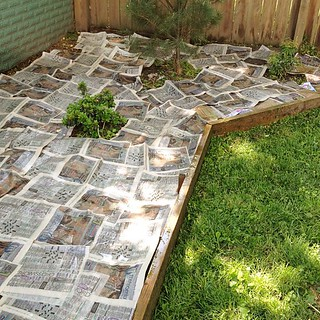 we're putting this pinterest myth to the test #noweeds #newspaperthieves