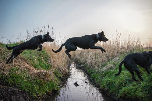 Dog Jump Sequence