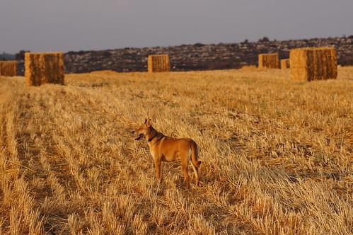 dog sony tamron90mmf28 sonya55