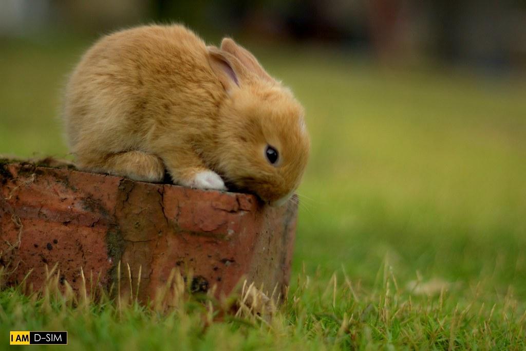 Baby Rabbit (20)