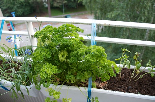 Herbs in the balcony