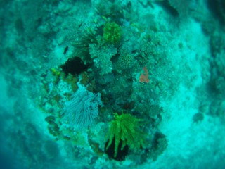 Coral reef in El Nido