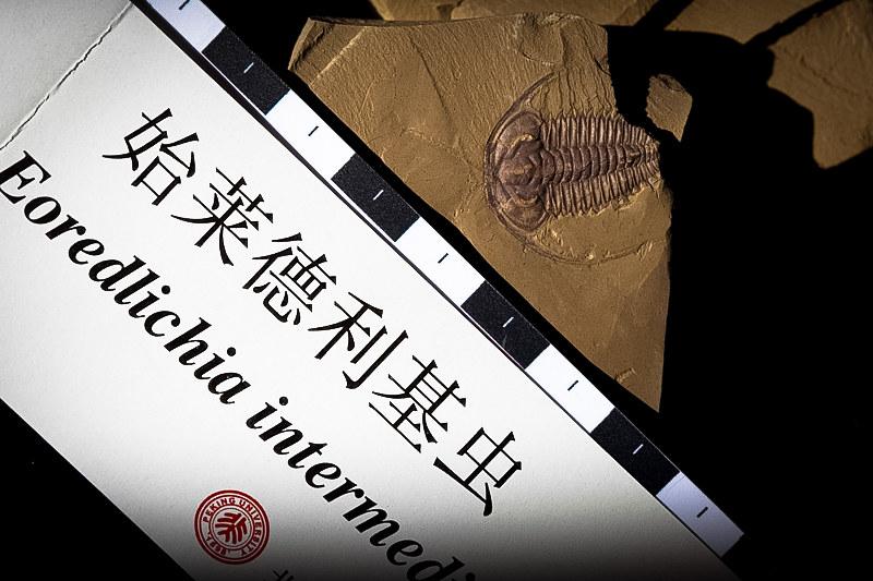 Chengjian Fossil