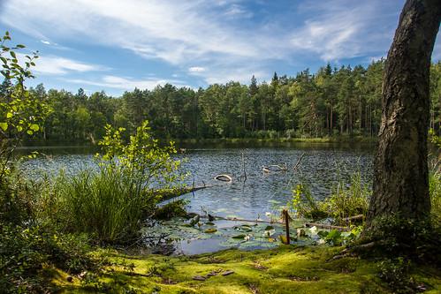 summer nature sony lithuania vasara lietuva gamta mariukasm sal16105 vietovės gražutėbicycletrail gražutėregionalpark gražutėsdviračiųtrasa gražutėsregioninisparkas