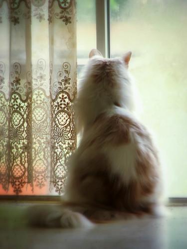 Daydreams by tanuki_green
