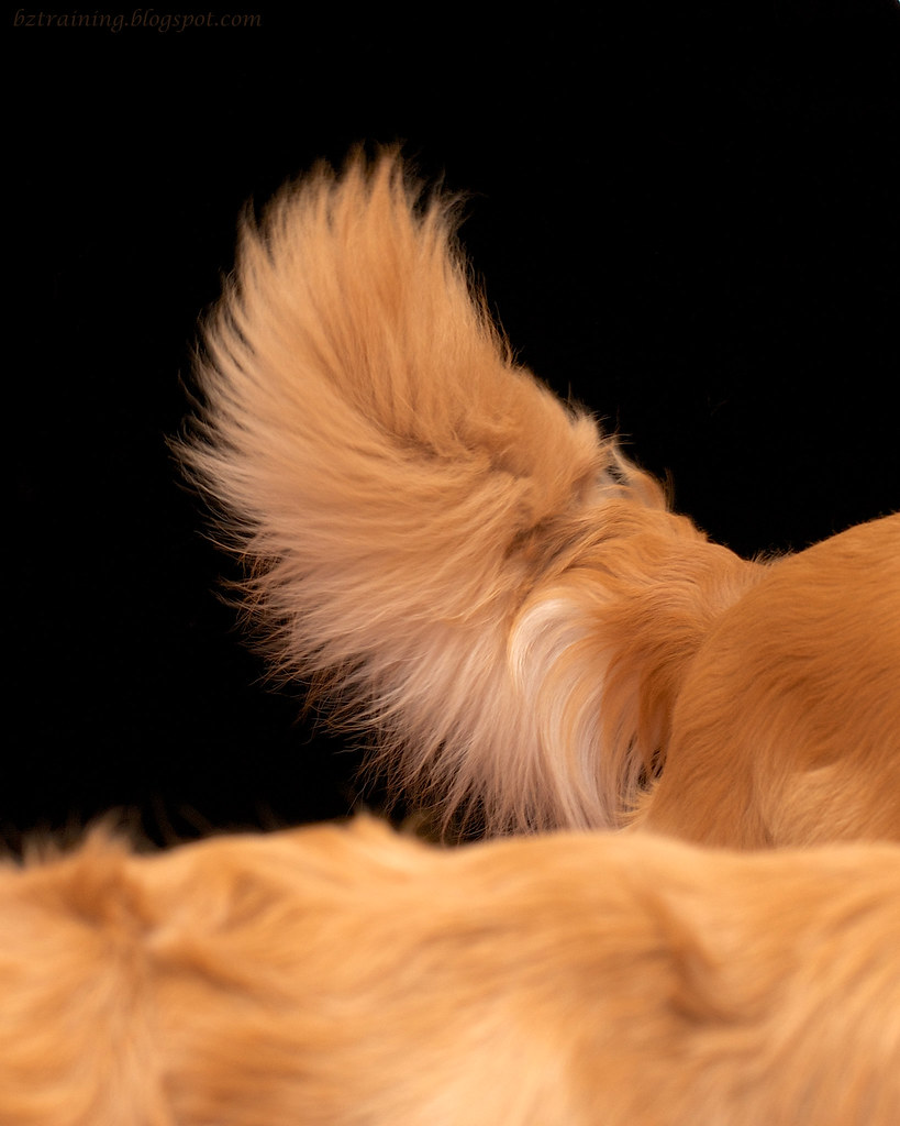 Golden Tail